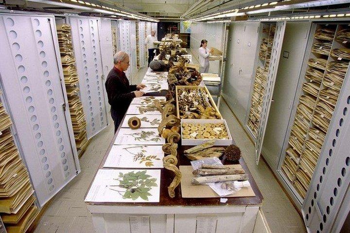 Серия снимков коллекции Смитсоновского Национального музея естественной истории