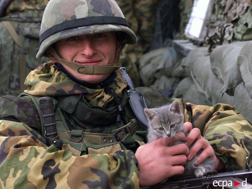 Как кошки участвовали в военных действиях