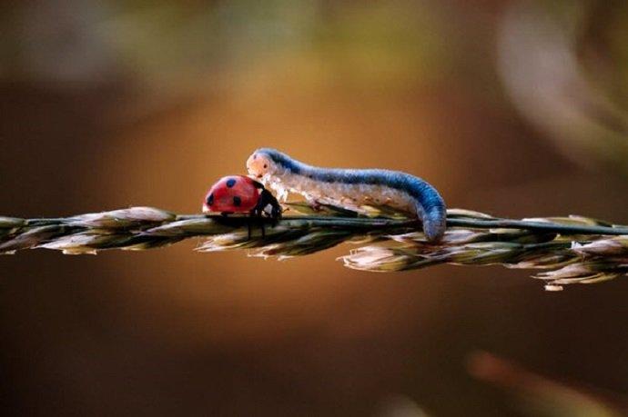 Мир насекомых и других обитателей флоры и фауны
