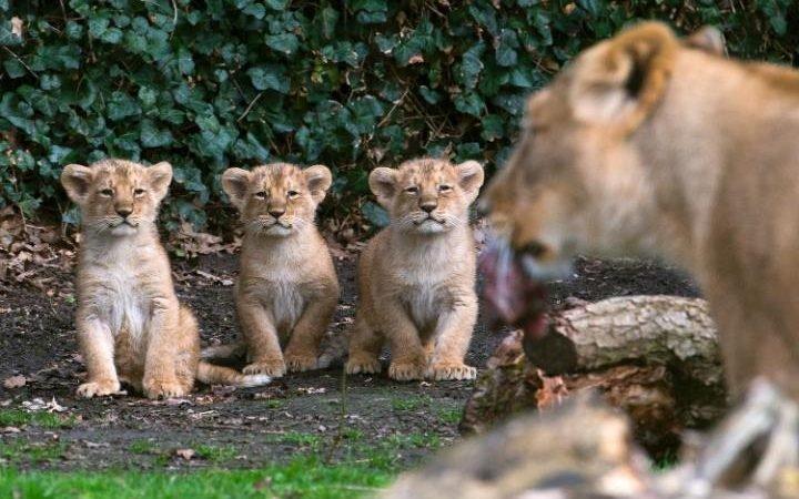Животные в интересных фотографиях