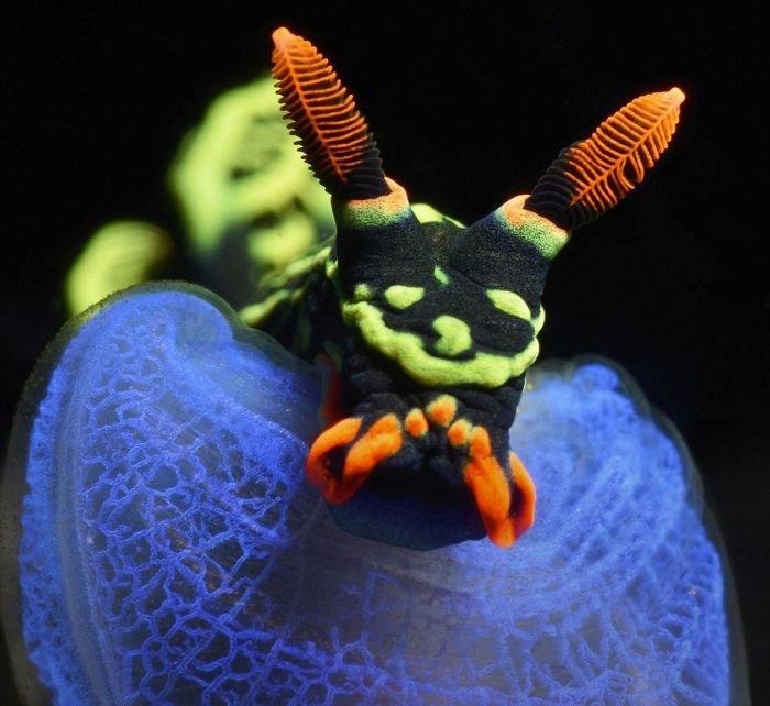Лучшие фотографии на конкурсе подводных фото (20 фото)