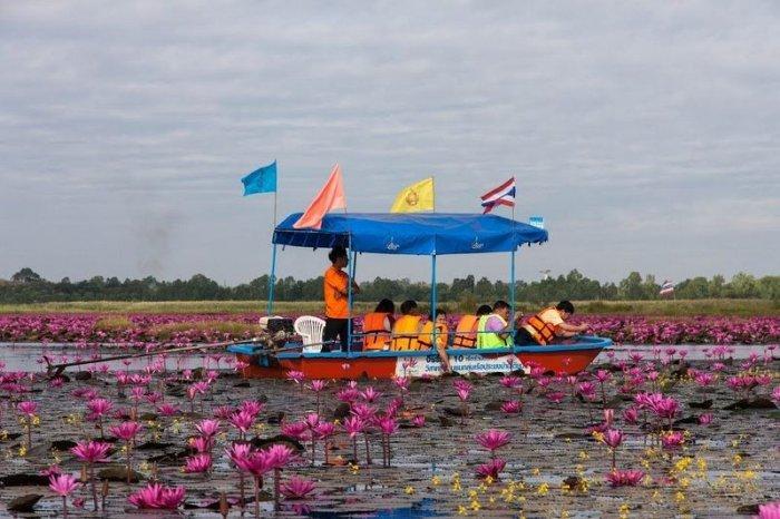 Озеро в розовых лотосах