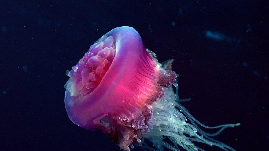 Несколько фактов о медузах