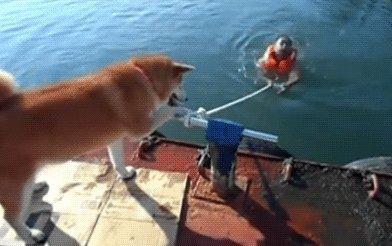 Как собаки «приходят на помощь» человеку!