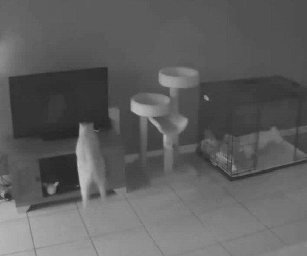 Кот-хулиган опрокинул телевизор