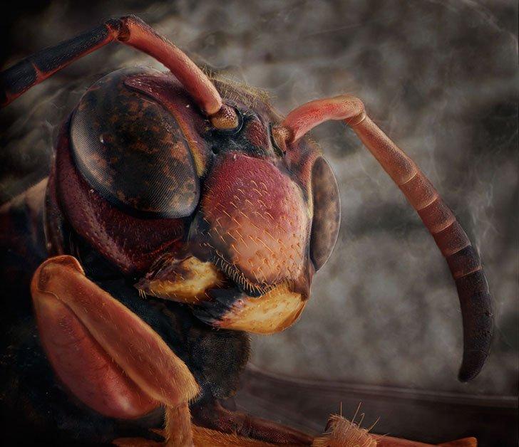 Фантастические портреты знакомых вам насекомых