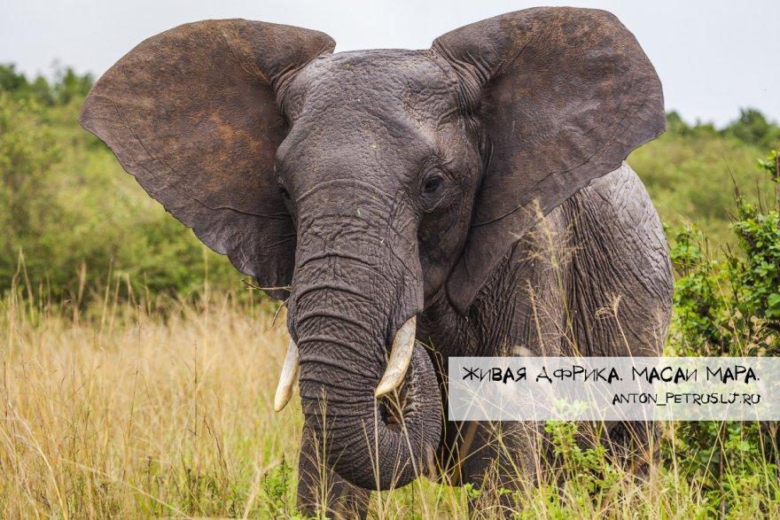 Парк Масаи Мара в Африке