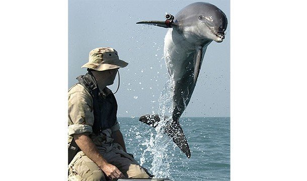 Познавательные факты про дельфинов и их невероятные способности