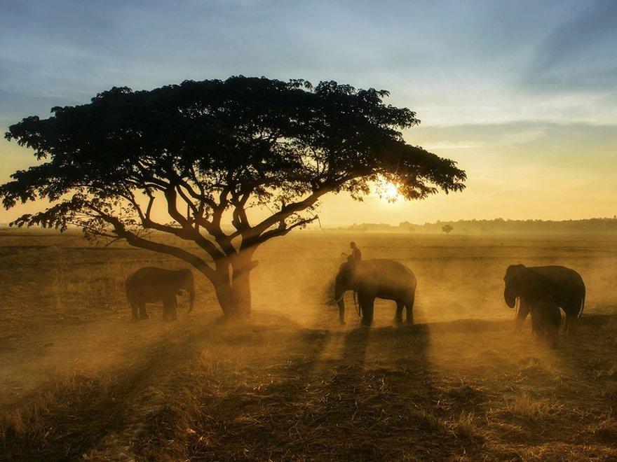 Коллекция лучших фотографий от National Geographic апреля 2016 года