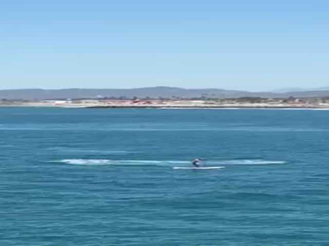 Мужчина чуть не столкнулся с китом