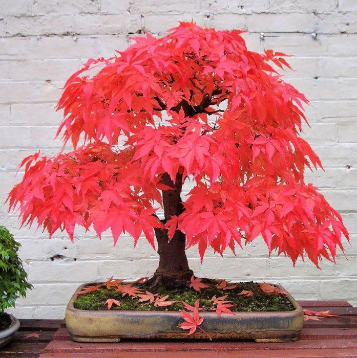 15 невероятно красивых мини-деревьев, созданных людьми