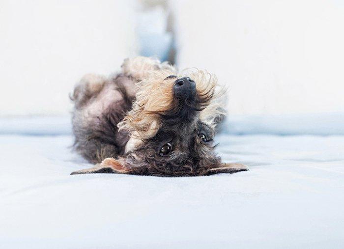 Фотографии весёлых собак с необычного ракурса