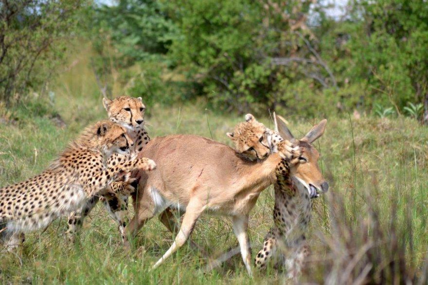 Удивительные животные в фотографиях