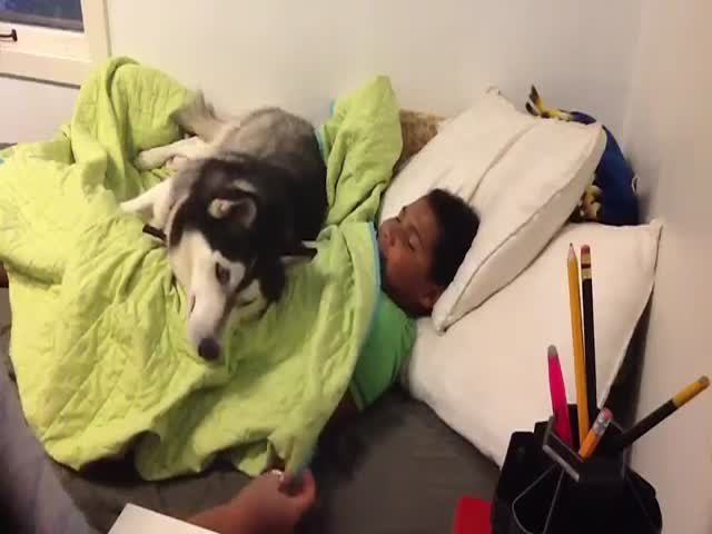 Смешная собака не дает женщине поднять сына с постели