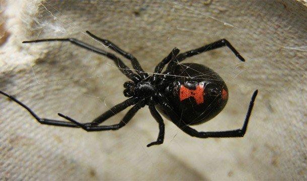 Ужасные и в то же время прекрасные пауки