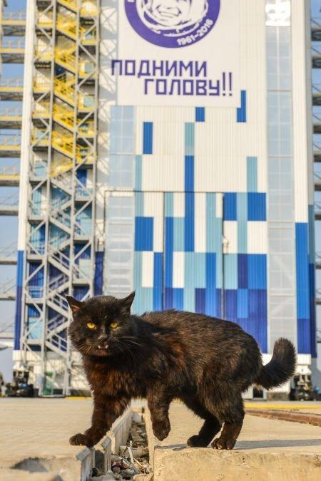Черного кота, живущего на космодроме «Восточный», эвакуируют на время запуска ракеты (2 фото)