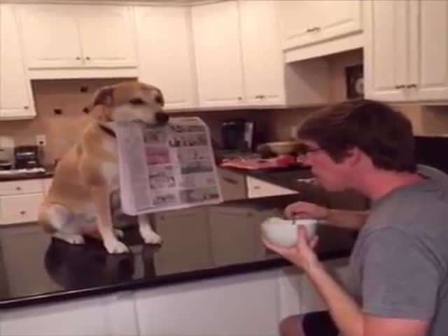 Собака-помощник