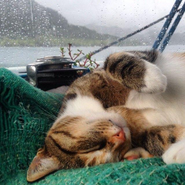 Девушка  вместе с кошкой совершают кругосветное путешествие на яхте (12 фото)