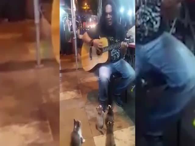 Музыкант поет для котят