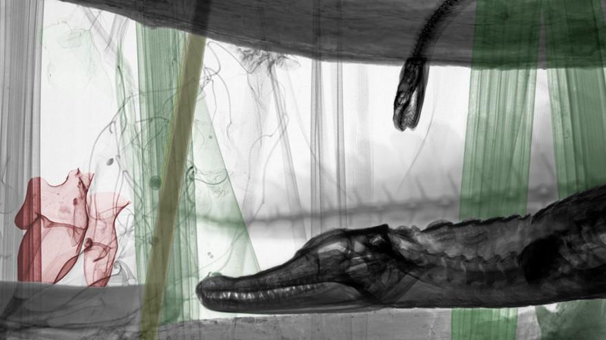 Мертвая красота в рентгеновских лучах