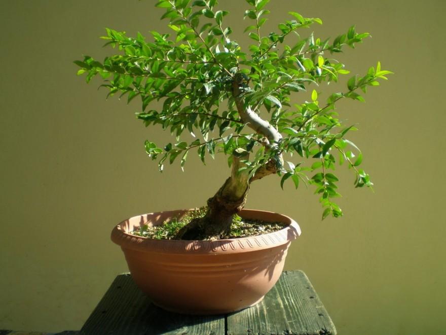 Растения для дома, приносящие счастье и благополучие