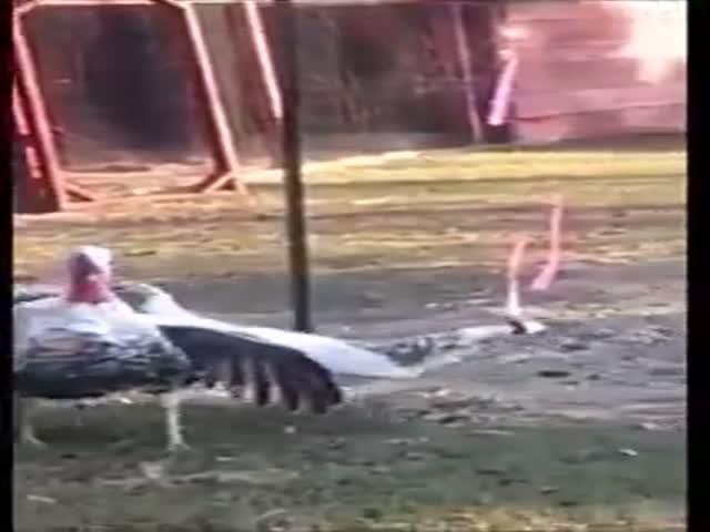 Видеоинструкция: как вскружить голову мужчине
