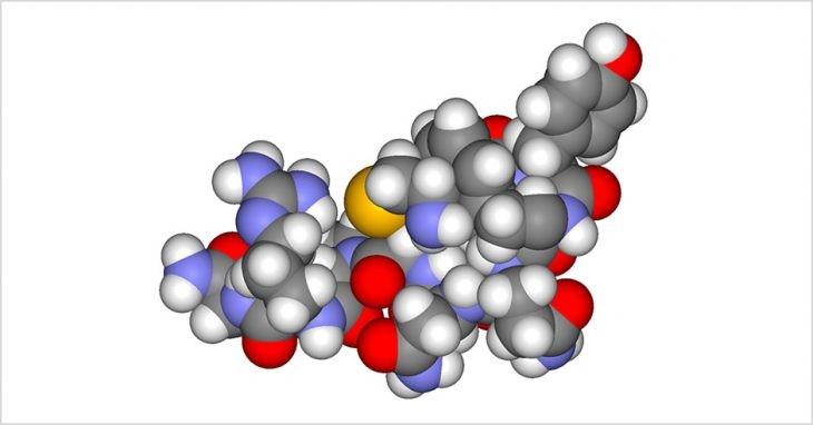 Интересные факты о гормонах, объясняющих, как они влияют на наше поведение
