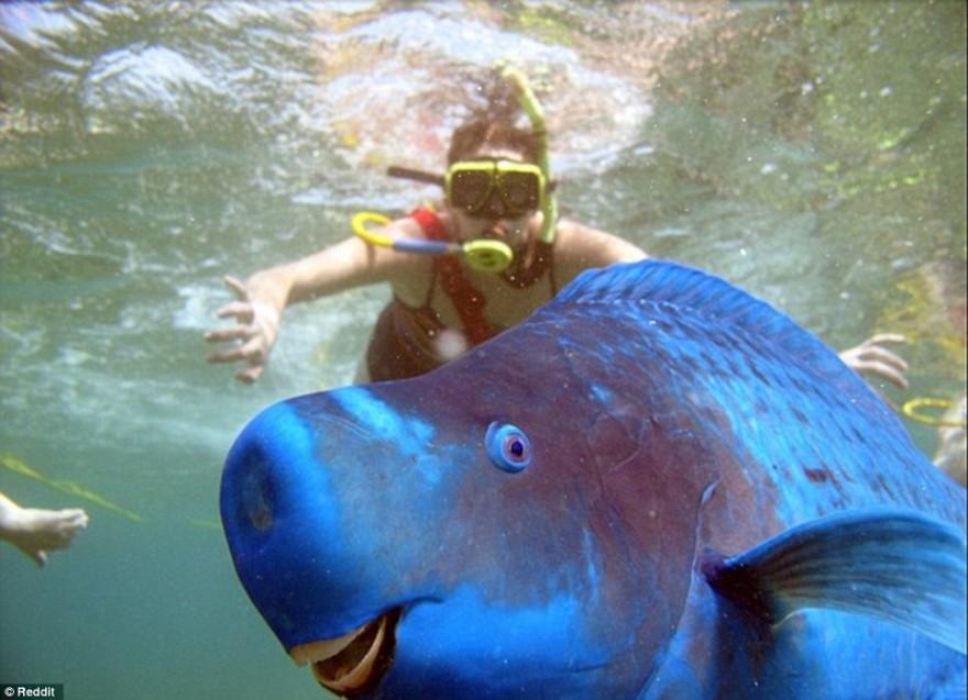 Смешные фотографии животных, которые неожиданно вклинились в селфи