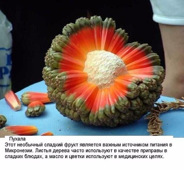 10 экзотических фруктов со всего света, о которых вы не слышали