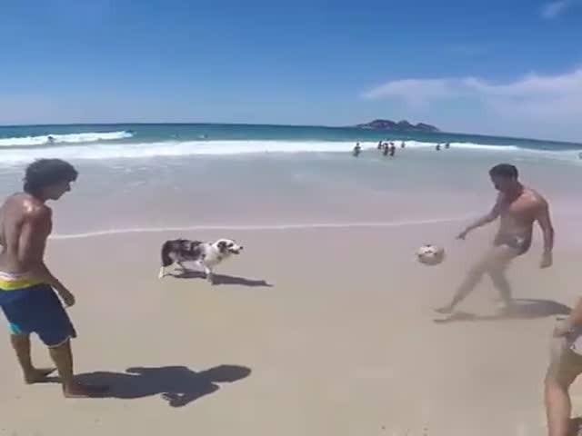 Интересная игра в мяч