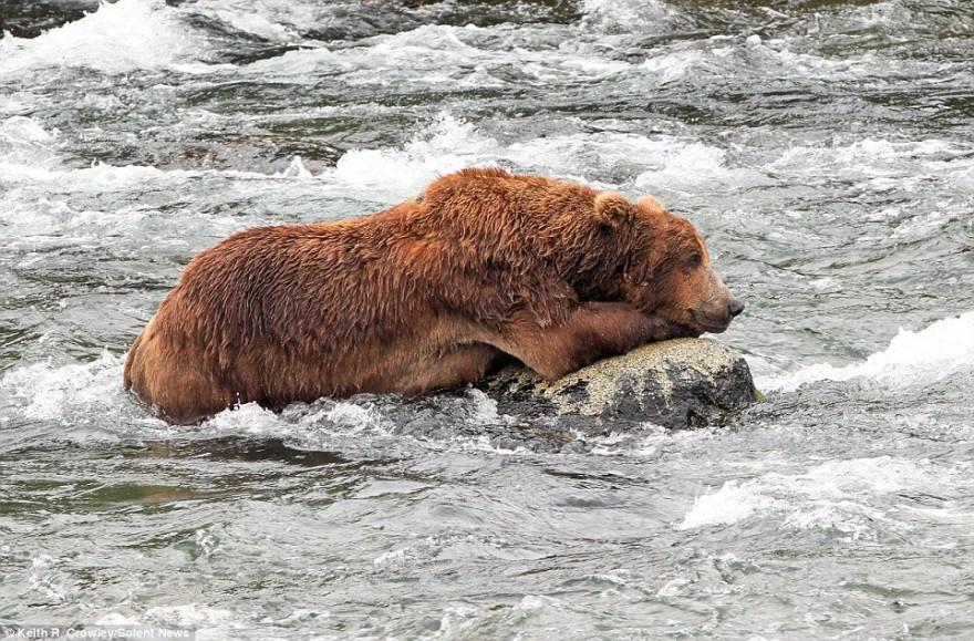 Медвежий бой возле реки