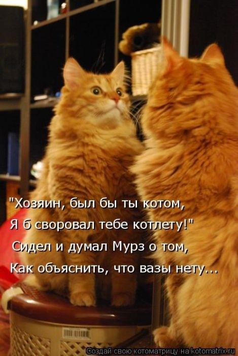 Веселая котоматрица (62 фото)