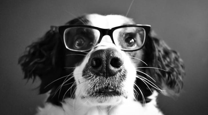 Исследование: насколько хорошо собаки понимают нашу речь