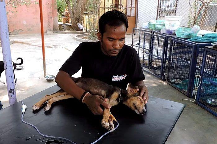 Спасение щенка в Индии (5 фото)