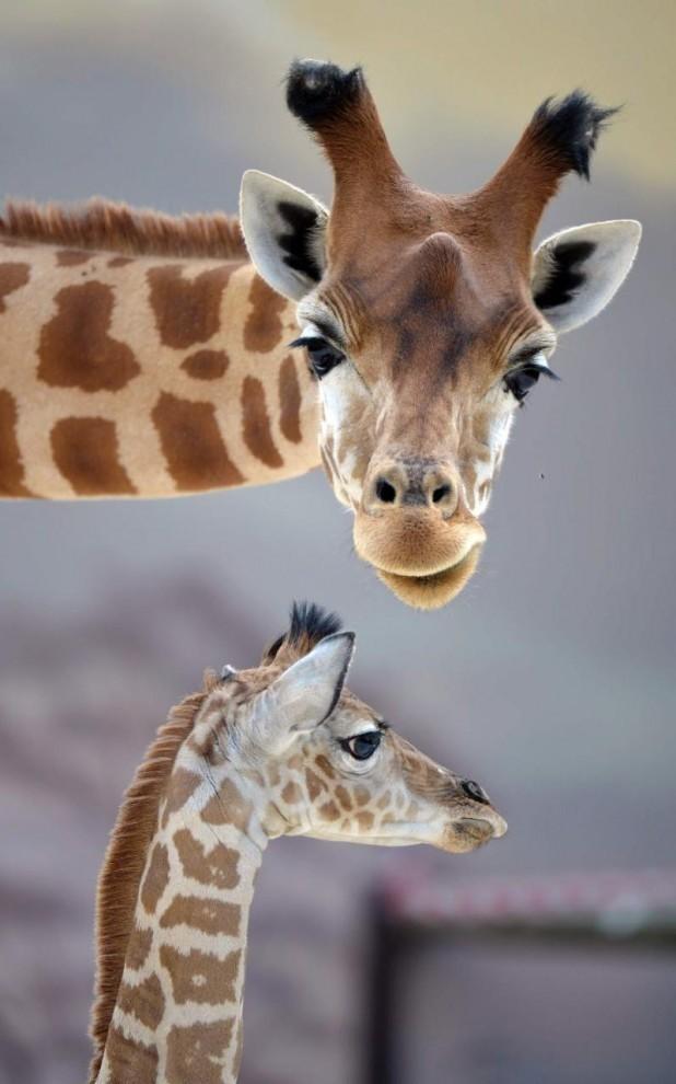 Подборка лучших фотографий животных прошлой недели