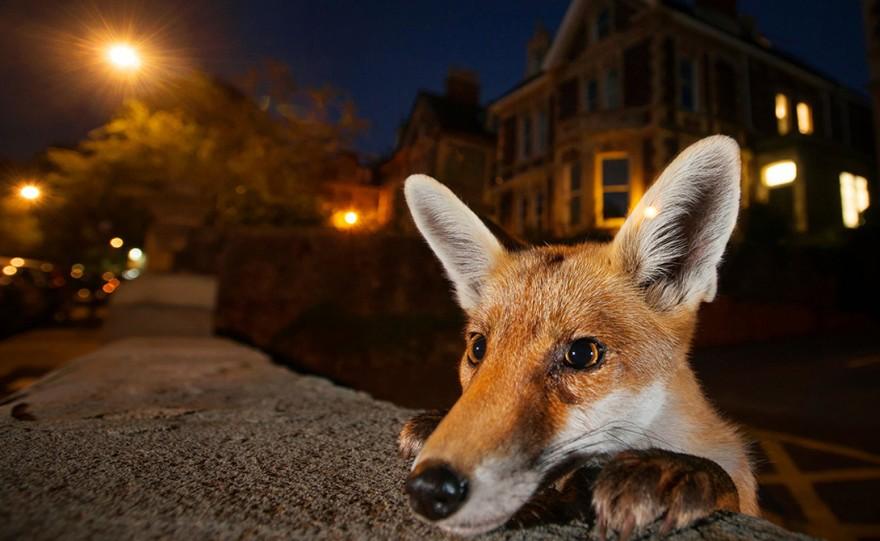 Необычные фото дикой природы этого года