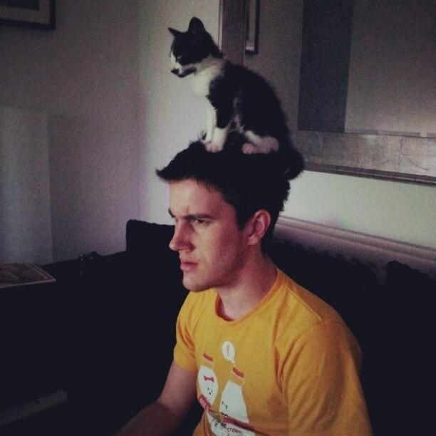 Да здравствуют коты на голове!