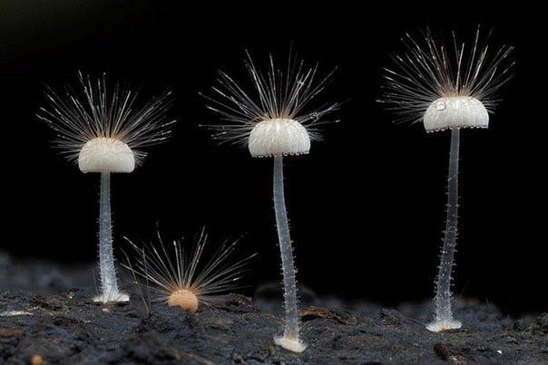 Сказочные фото грибов