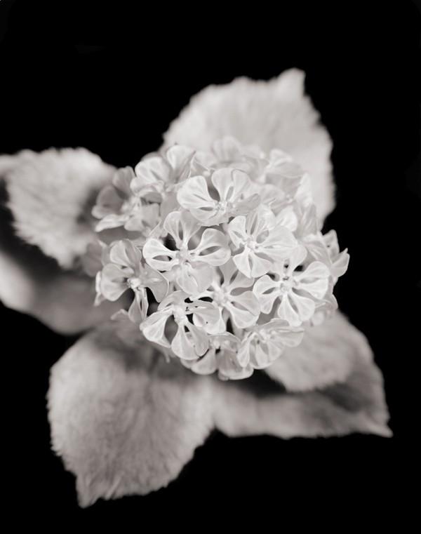Цветы японского художника из необычных материалов