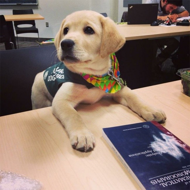 15 смешных собак, которые уверены в том, что они люди
