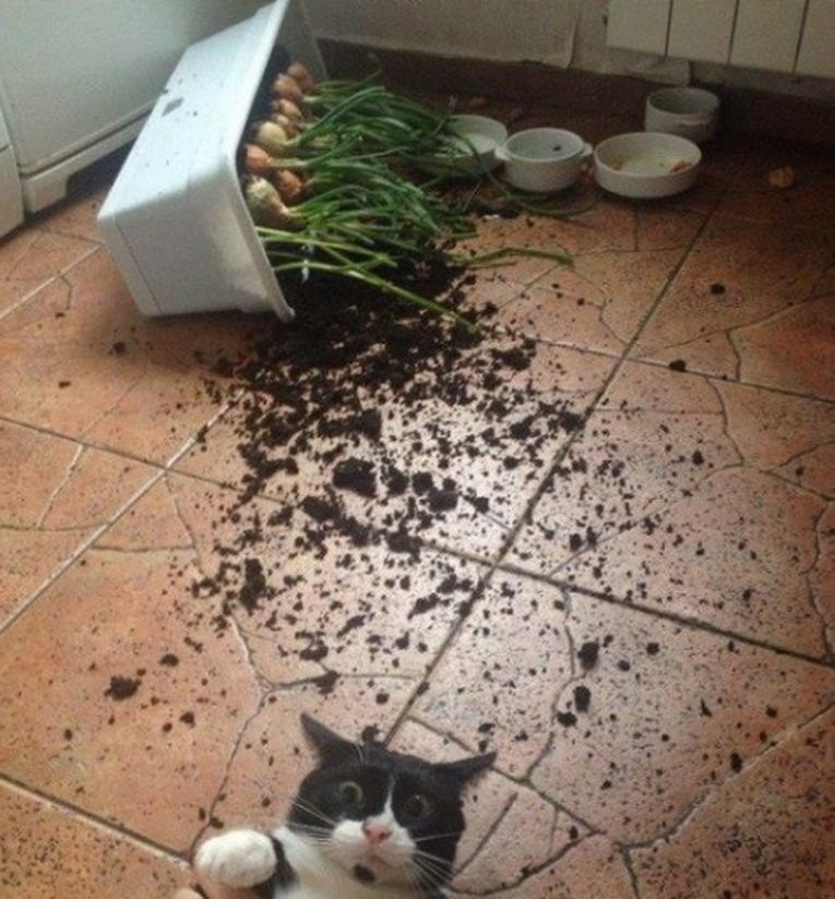 Кошки, которых застигнули врасплох