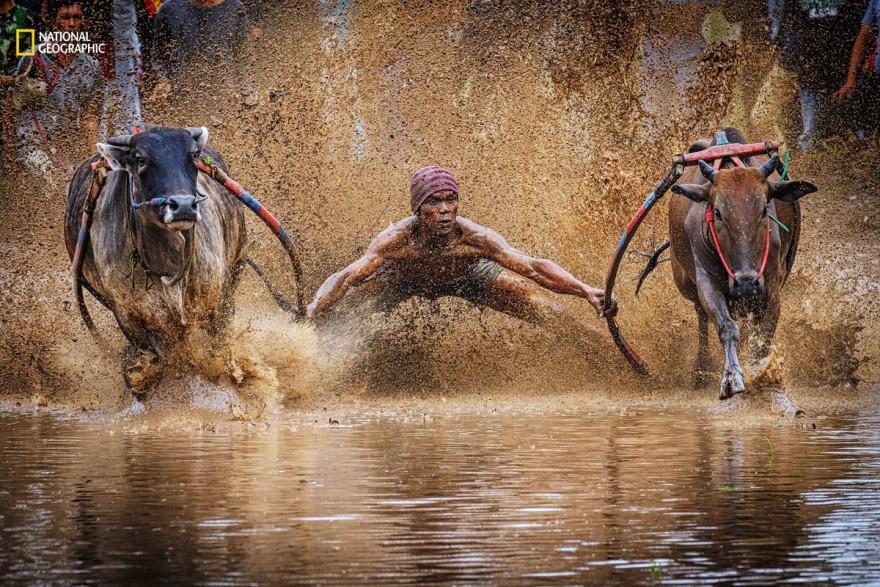 Интересные фотографии по мнению читателей, присланные на конкурс National Geographic 2016