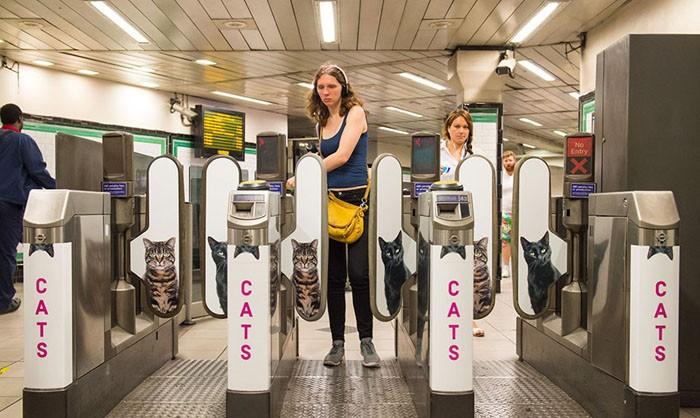 Реклама в лондонском метро была заменена на постеры с котами
