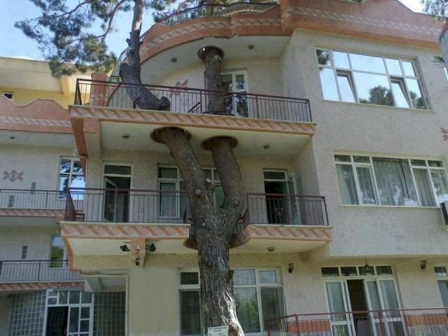 12 сооружений, построенных вокруг деревьев