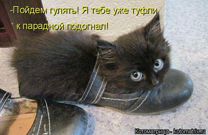 Смешная котоматрица (50 фото)