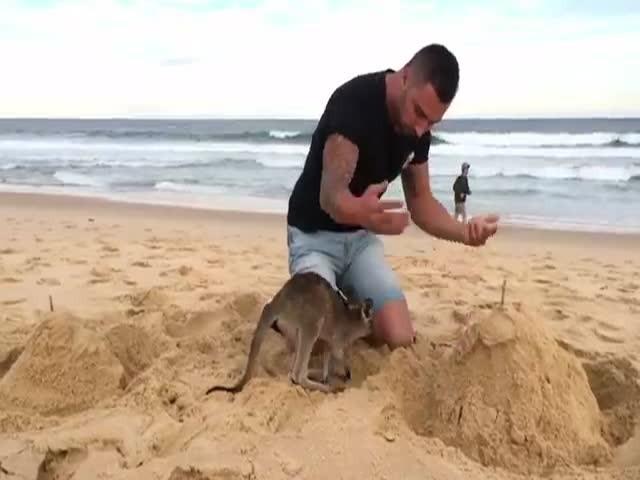 Маленький кенгуру стал компаньоном австралийского видеоблогера