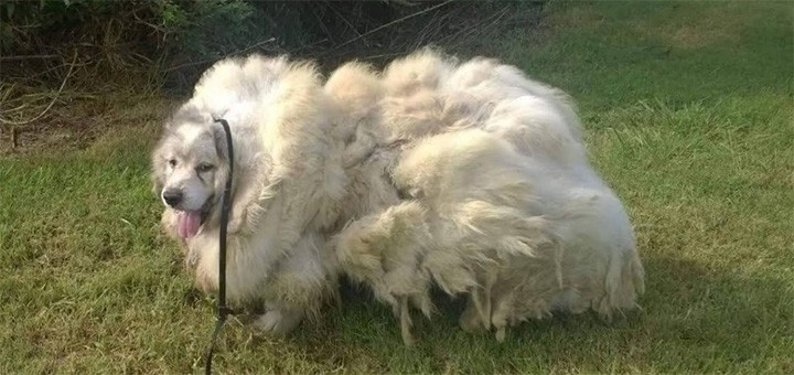 В грязи за дверью лежал совершенно заросший пес. Но срезав 16 кг шерсти, люди глаз от него отвести не могут
