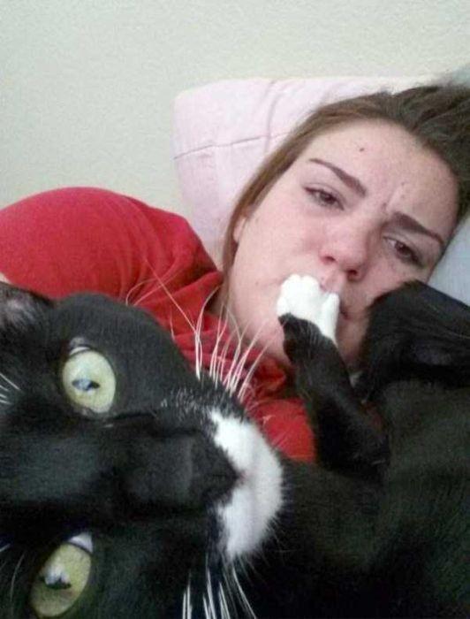 Назойливые коты (43 фото)