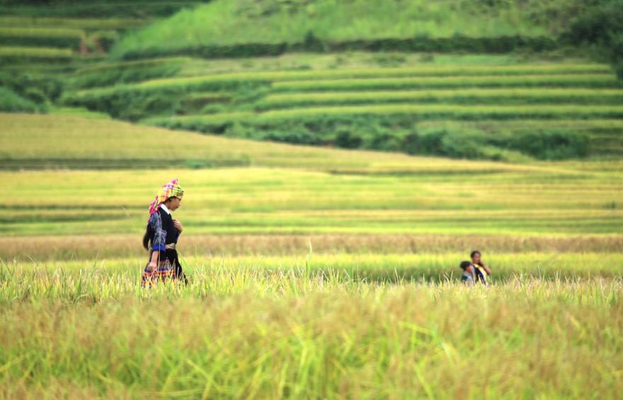 Невероятные рисовые террасы