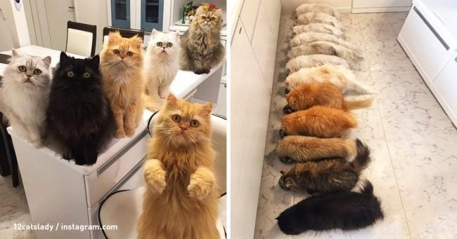 Посмотрите, как проходят будни девушки, приютившей 12 котов